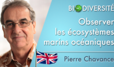 Observation of oceanic marine ecosystems