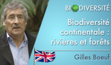 Continental biodiversity: rivers and forests - Clip