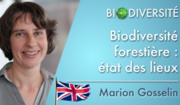 The forest biodiversity: an assessment