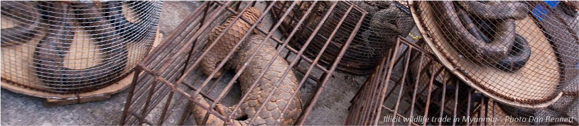 Illicit wildlife trade in Myanmar - Photo Dan Bennett